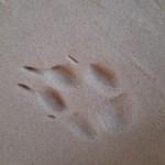 Рубрика «Кто здесь наследил?»